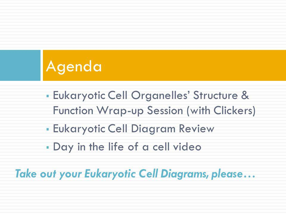 Eukaryotic Cell Organelles Structure & Function Wrap-up Session (with Clickers) Eukaryotic Cell Diagram Review Day in the life of a cell video Agenda Take out your Eukaryotic Cell Diagrams, please…