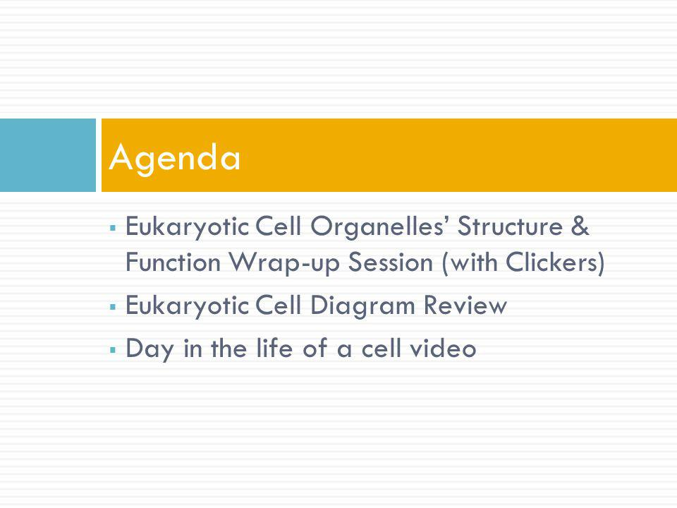 Eukaryotic Cell Organelles Structure & Function Wrap-up Session (with Clickers) Eukaryotic Cell Diagram Review Day in the life of a cell video Agenda