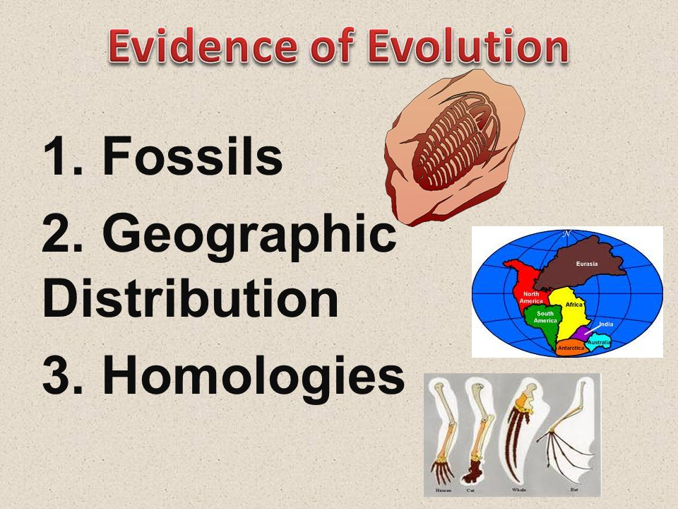 1. Fossils 2. Geographic Distribution 3. Homologies