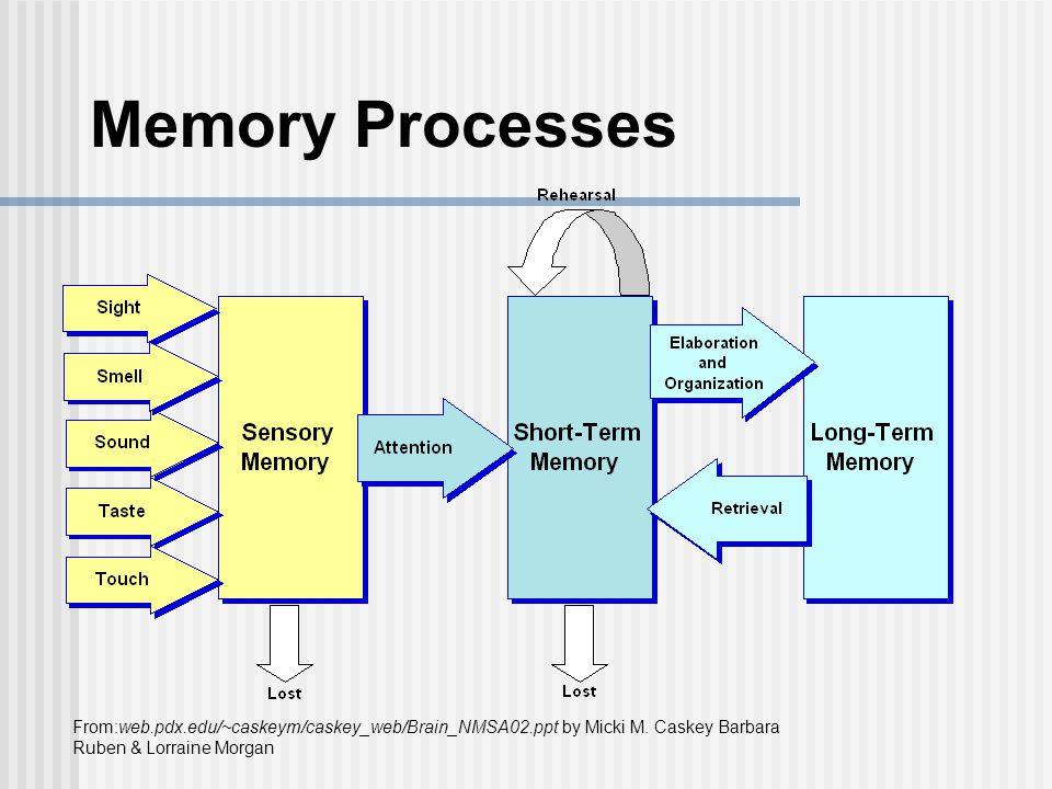 Memory Processes From:web.pdx.edu/~caskeym/caskey_web/Brain_NMSA02.ppt by Micki M.