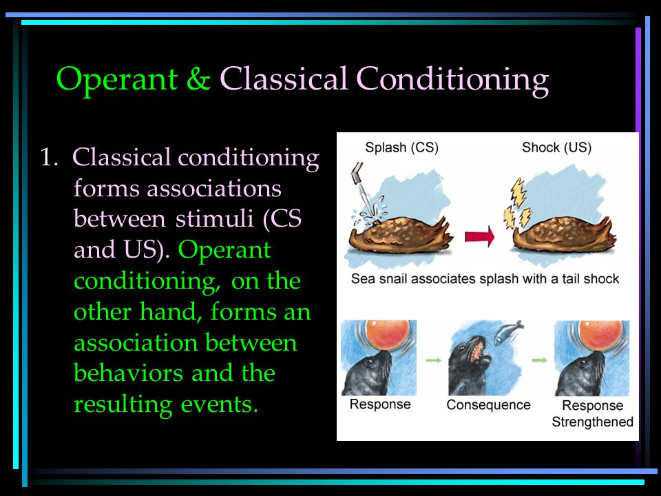 Operant & Classical Conditioning 1.