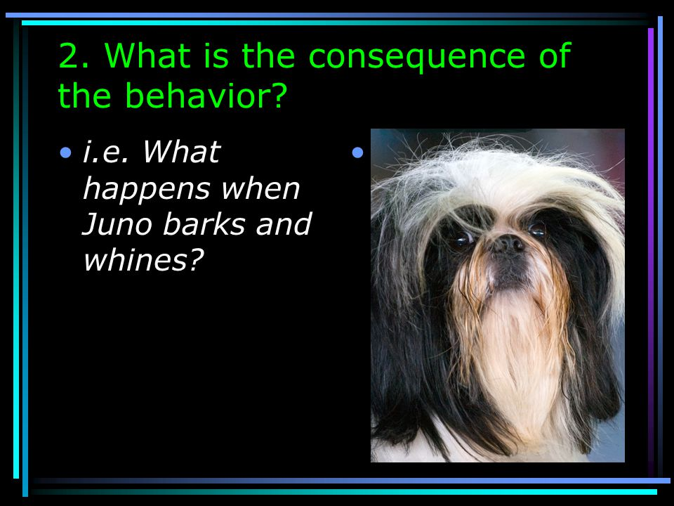 1. What is the Behavior? Barking and whining after dinner