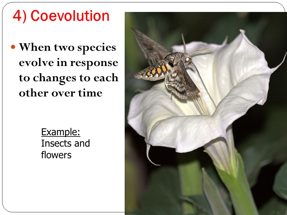 4) Coevolution When two species evolve in response to changes to each other over time Example: Insects and flowers