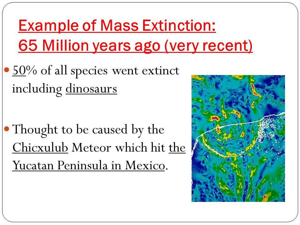Example of Mass Extinction: 65 Million years ago (very recent) 50% of all species went extinct including dinosaurs Thought to be caused by the Chicxulub Meteor which hit the Yucatan Peninsula in Mexico.