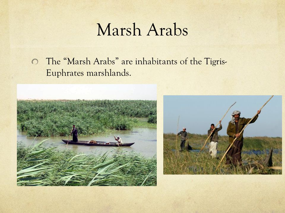 Marsh Arabs The Marsh Arabs are inhabitants of the Tigris- Euphrates marshlands.