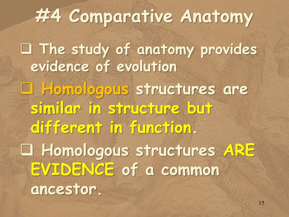 #4 Comparative Anatomy The study of anatomy provides evidence of evolution The study of anatomy provides evidence of evolution Homologous structures are similar in structure but different in function.