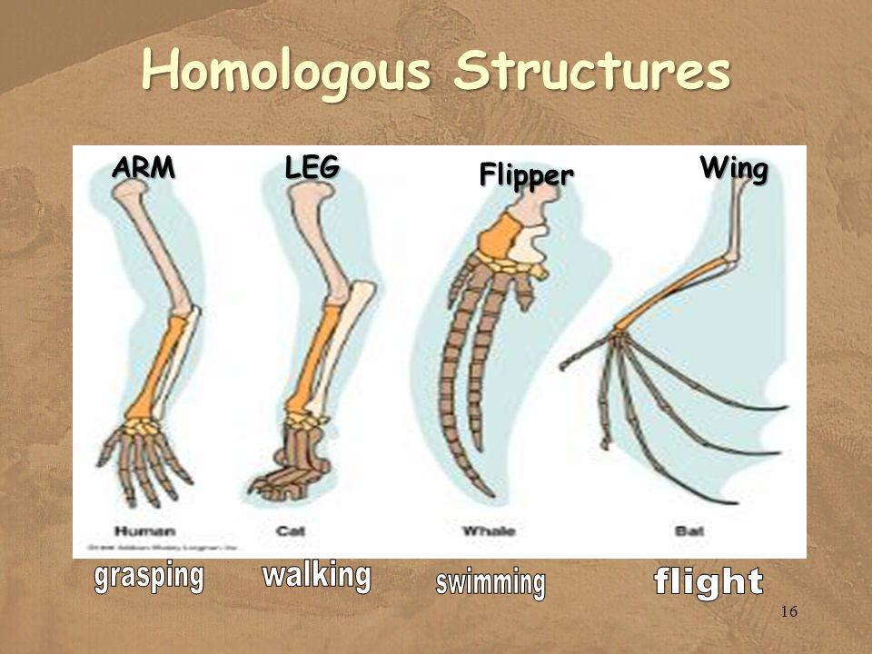 Homologous Structures ARMLEG Flipper Wing 16