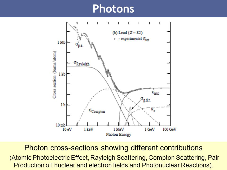 31 Photons Photon cross-sections showing different contributions (Atomic Photoelectric Effect, Rayleigh Scattering, Compton Scattering, Pair Productio