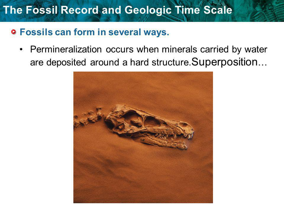 The Fossil Record and Geologic Time Scale Fossils can form in several ways. Permineralization occurs when minerals carried by water are deposited arou