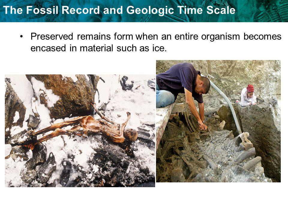 The Fossil Record and Geologic Time Scale Preserved remains form when an entire organism becomes encased in material such as ice.
