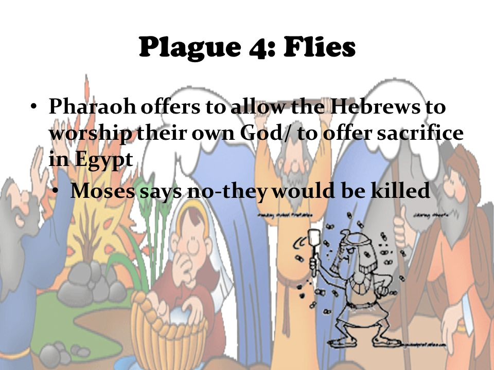 Plague 4: Flies Pharaoh offers to allow the Hebrews to worship their own God/ to offer sacrifice in Egypt Moses says no-they would be killed