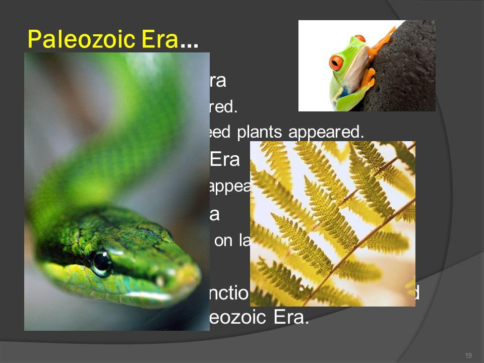 Paleozoic Era… Early Paleozoic Era Vertebrates appeared. Ferns and early seed plants appeared. Middle Paleozoic Era 4-legged animals appeared, i.e., a