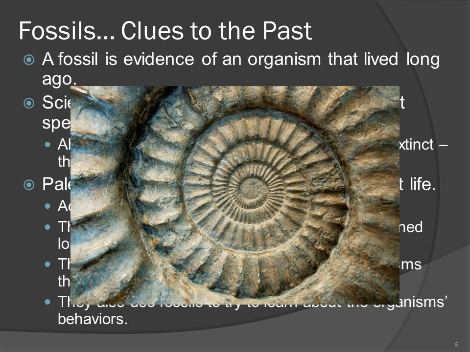 Fossils… Clues to the Past A fossil is evidence of an organism that lived long ago. Scientists study fossils to learn about ancient species. About 95%