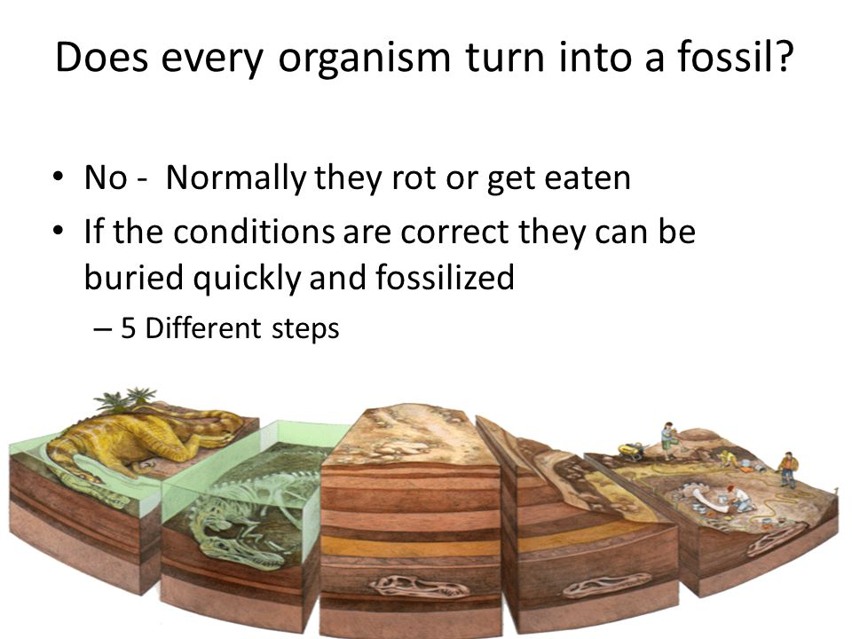 How are fossils formed.