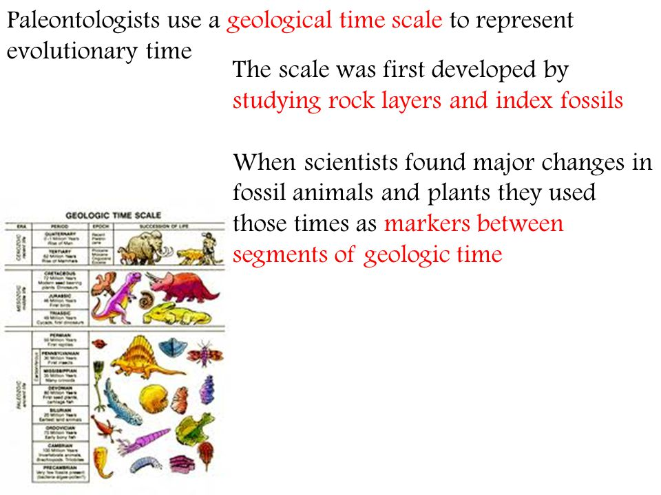 The scale was first developed by studying rock layers and index fossils When scientists found major changes in fossil animals and plants they used tho