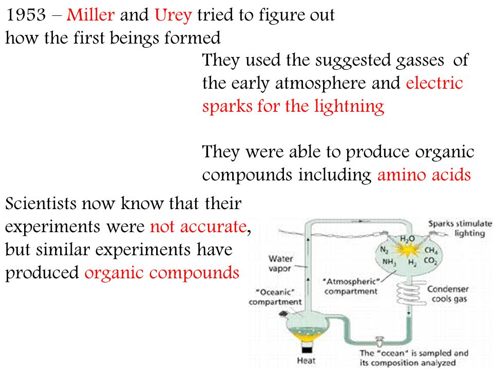 Scientists now know that their experiments were not accurate, but similar experiments have produced organic compounds 1953 – Miller and Urey tried to