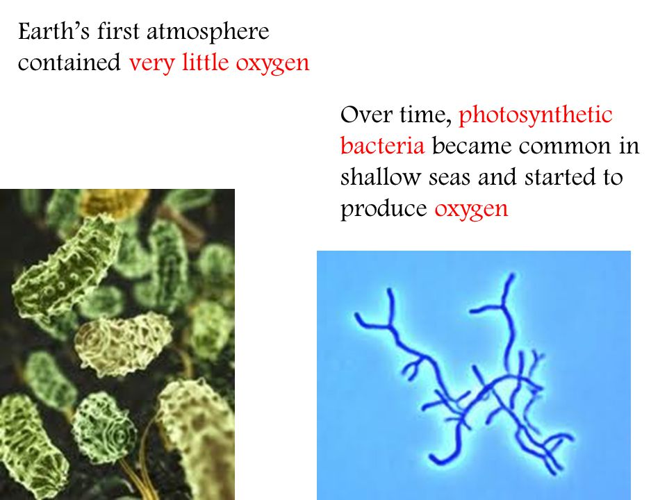 Earths first atmosphere contained very little oxygen Over time, photosynthetic bacteria became common in shallow seas and started to produce oxygen