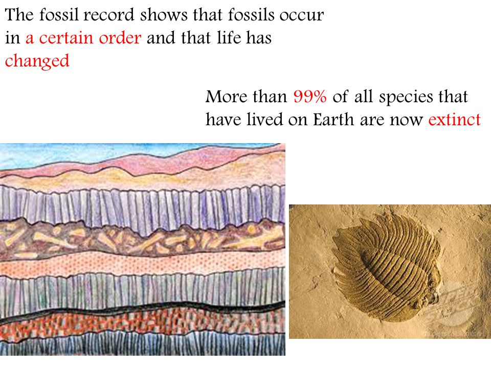 The fossil record shows that fossils occur in a certain order and that life has changed More than 99% of all species that have lived on Earth are now