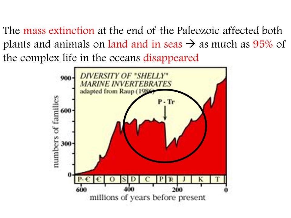 The mass extinction at the end of the Paleozoic affected both plants and animals on land and in seas as much as 95% of the complex life in the oceans