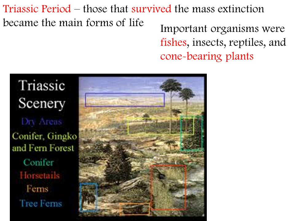 Triassic Period – those that survived the mass extinction became the main forms of life Important organisms were fishes, insects, reptiles, and cone-b