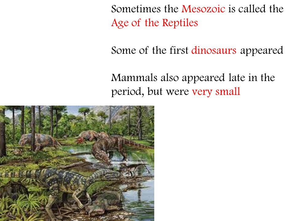 Sometimes the Mesozoic is called the Age of the Reptiles Some of the first dinosaurs appeared Mammals also appeared late in the period, but were very