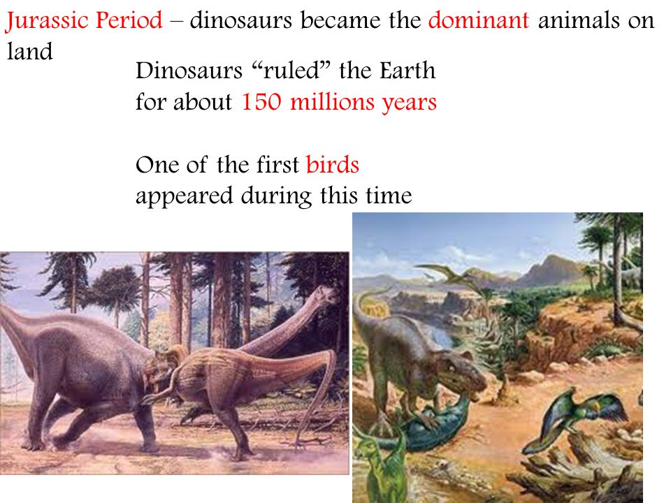 Dinosaurs ruled the Earth for about 150 millions years One of the first birds appeared during this time Jurassic Period – dinosaurs became the dominan