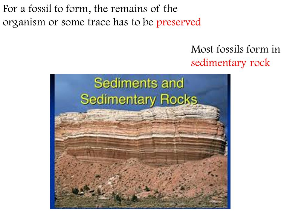 Most fossils form in sedimentary rock For a fossil to form, the remains of the organism or some trace has to be preserved