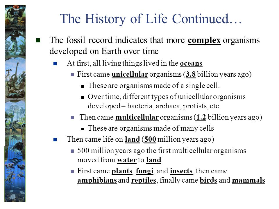 The History of Life Continued… The fossil record indicates that more complex organisms developed on Earth over time At first, all living things lived in the oceans First came unicellular organisms (3.8 billion years ago) These are organisms made of a single cell.