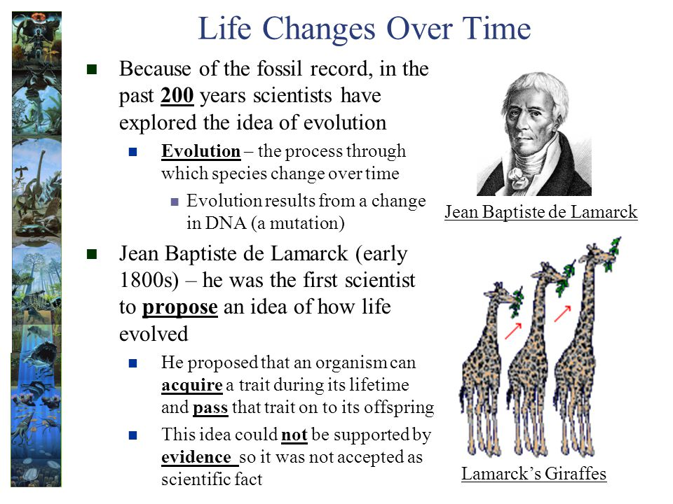 Life Changes Over Time Because of the fossil record, in the past 200 years scientists have explored the idea of evolution Evolution – the process through which species change over time Evolution results from a change in DNA (a mutation) Jean Baptiste de Lamarck (early 1800s) – he was the first scientist to propose an idea of how life evolved He proposed that an organism can acquire a trait during its lifetime and pass that trait on to its offspring This idea could not be supported by evidence so it was not accepted as scientific fact Lamarcks Giraffes Jean Baptiste de Lamarck