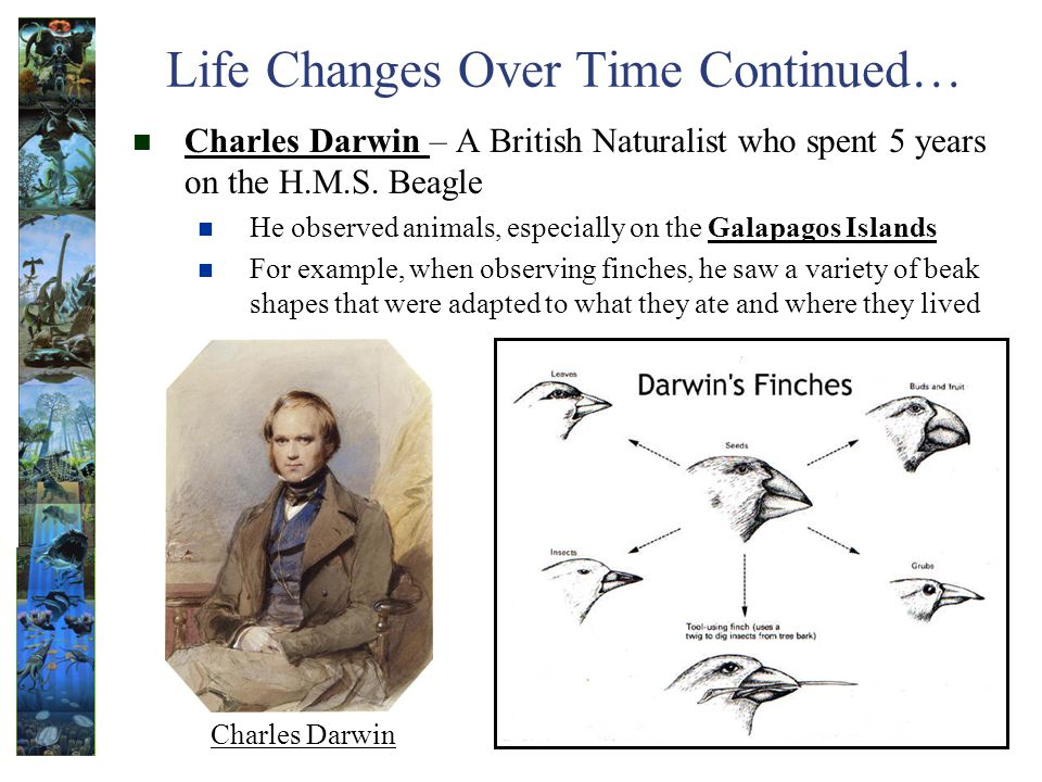 Life Changes Over Time Continued… Charles Darwin – A British Naturalist who spent 5 years on the H.M.S.