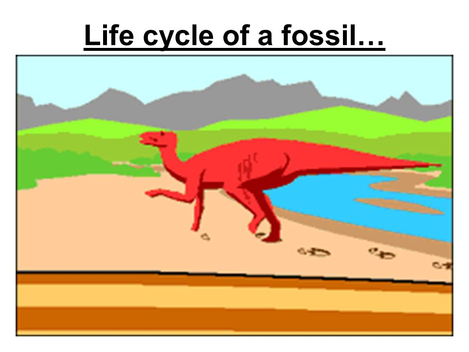 Life cycle of a fossil…