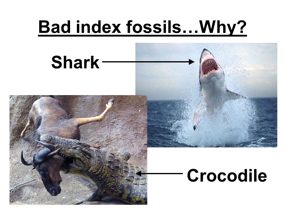 Bad index fossils…Why? Shark Crocodile