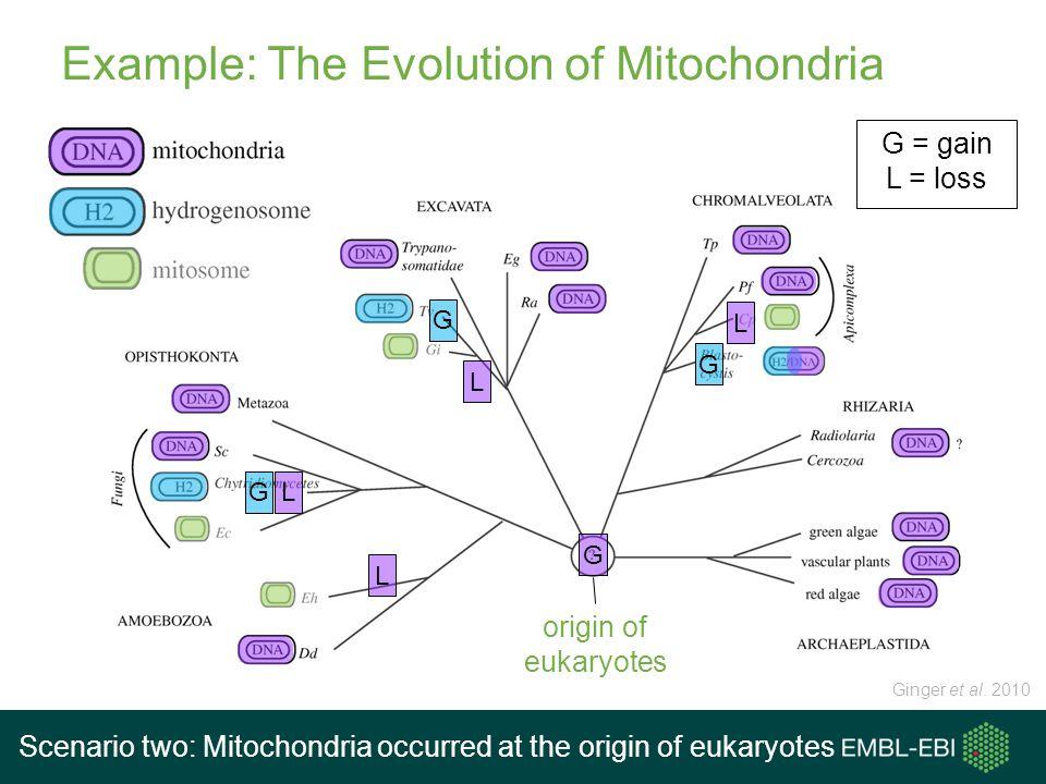 Example: The Evolution of Mitochondria origin of eukaryotes Ginger et al. 2010 G G = gain L = loss Scenario two: Mitochondria occurred at the origin o
