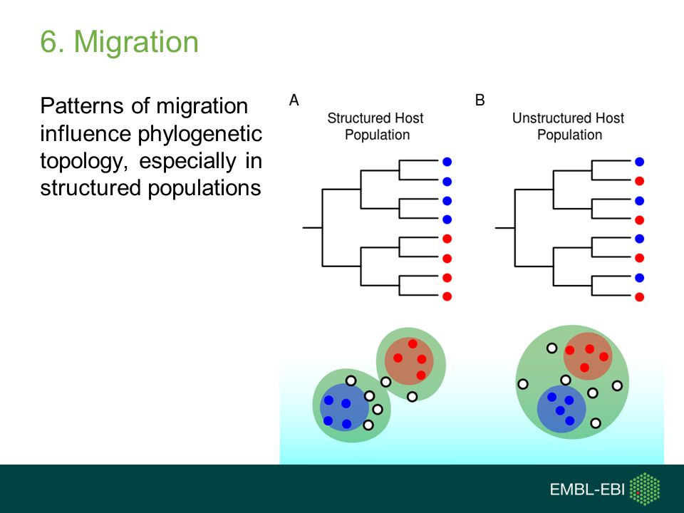 6. Migration Patterns of migration influence phylogenetic topology, especially in structured populations