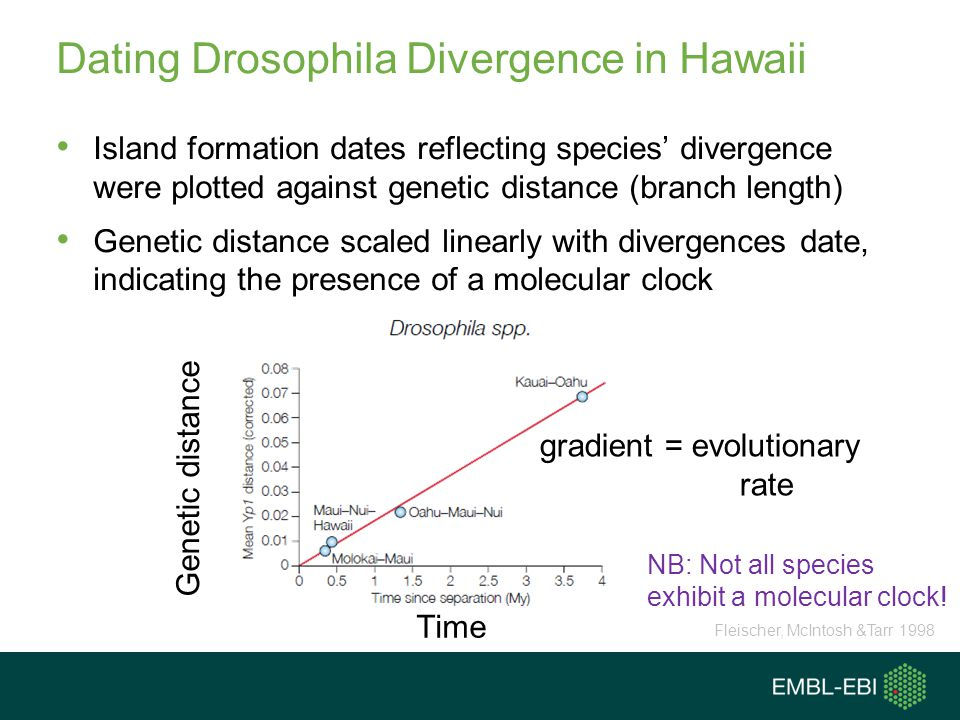 Dating Drosophila Divergence in Hawaii Island formation dates reflecting species divergence were plotted against genetic distance (branch length) Gene