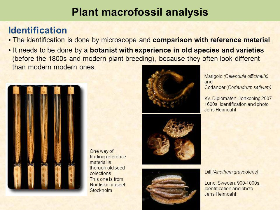 Plant macrofossil analysis Identification The identification is done by microscope and comparison with reference material.
