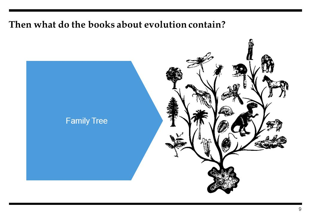 9 Then what do the books about evolution contain Family Tree