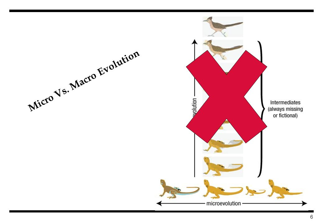 6 Micro Vs. Macro Evolution