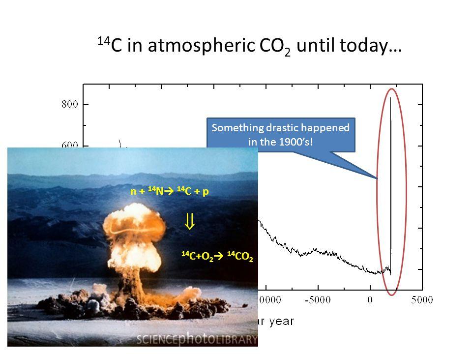 14 C in atmospheric CO 2 until today… Something drastic happened in the 1900s! n + 14 N 14 C + p 14 C+O 2 14 CO 2
