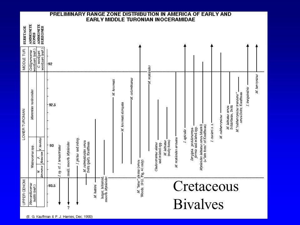 Cretaceous Bivalves