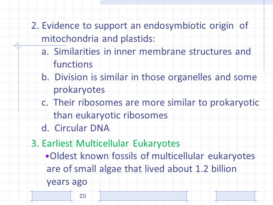 2. Evidence to support an endosymbiotic origin of mitochondria and plastids: a. Similarities in inner membrane structures and functions b. Division is