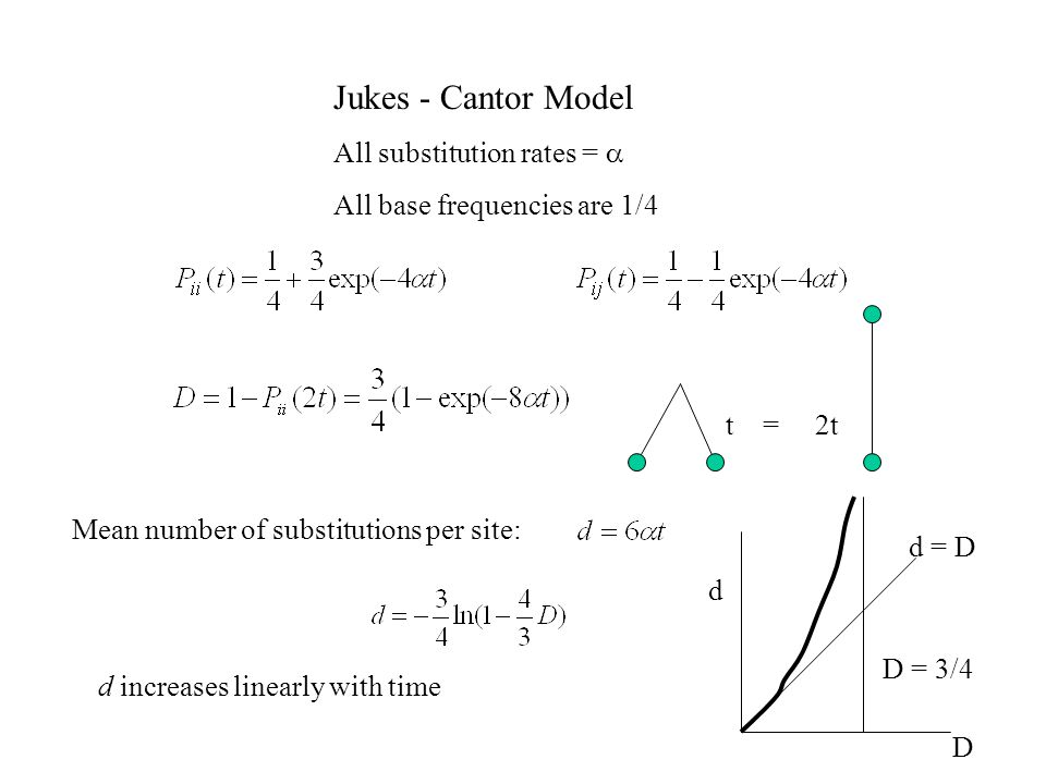Jukes - Cantor Model All substitution rates = All base frequencies are 1/4 t = 2t Mean number of substitutions per site: d increases linearly with time d = D D = 3/4 D d