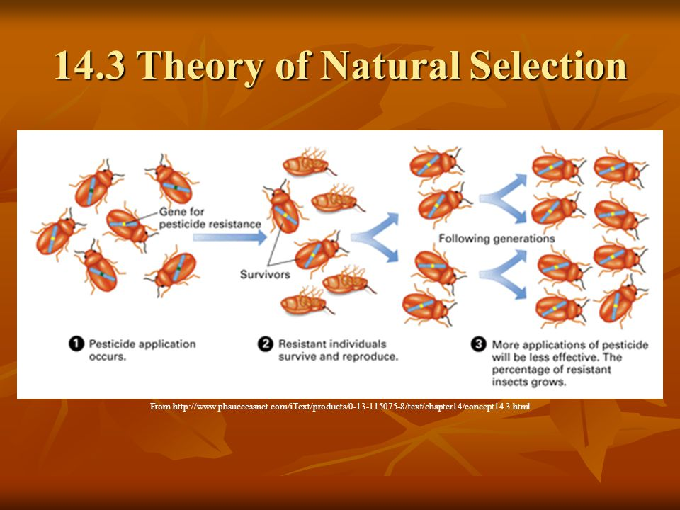 14.3 Theory of Natural Selection From http://www.phsuccessnet.com/iText/products/0-13-115075-8/text/chapter14/concept14.3.html