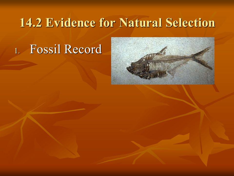 14.2 Evidence for Natural Selection 1. Fossil Record