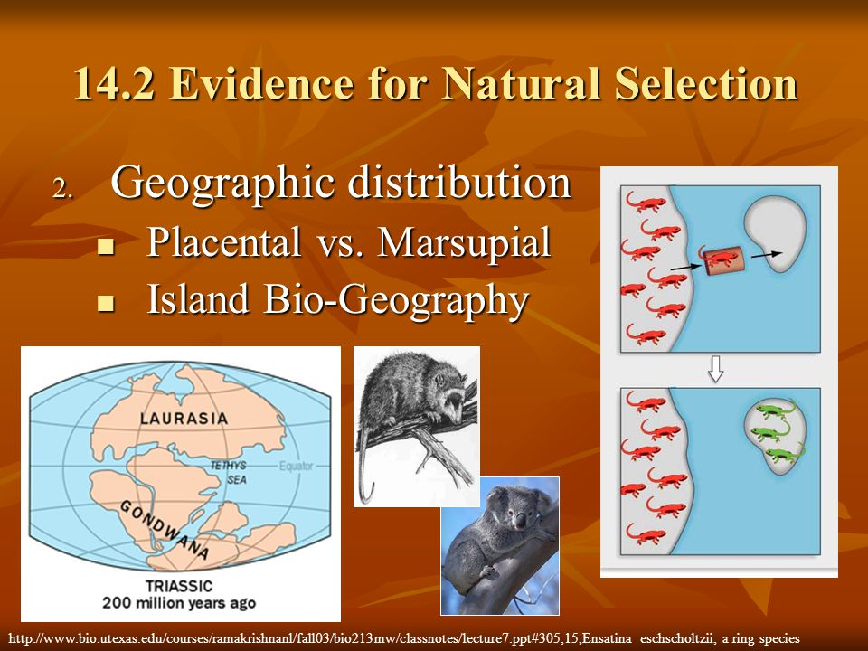 14.2 Evidence for Natural Selection 2. Geographic distribution Placental vs. Marsupial Placental vs. Marsupial Island Bio-Geography Island Bio-Geograp