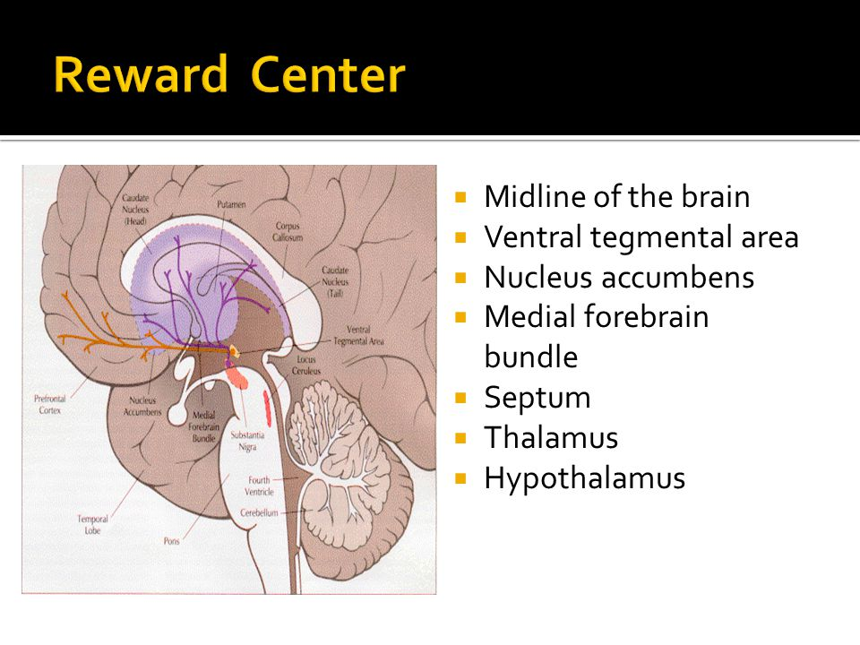 Midline of the brain Ventral tegmental area Nucleus accumbens Medial forebrain bundle Septum Thalamus Hypothalamus