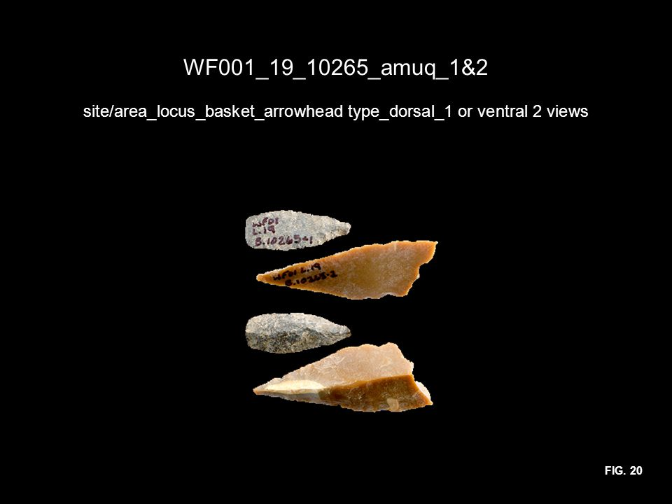 WF001_19_10265_amuq_1&2 site/area_locus_basket_arrowhead type_dorsal_1 or ventral 2 views FIG. 20