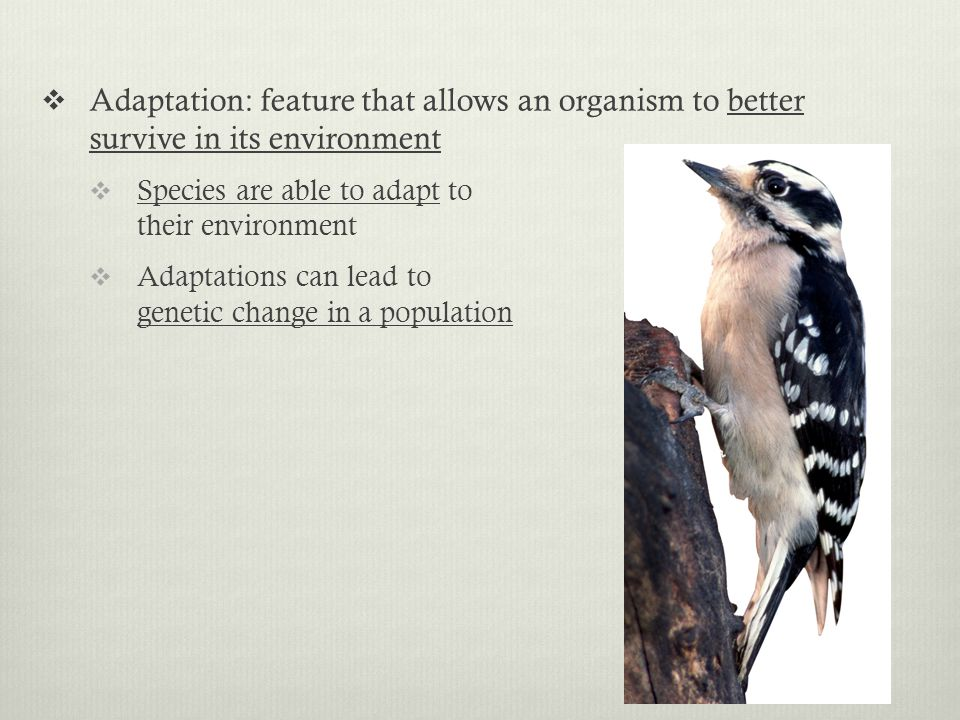 Adaptation: feature that allows an organism to better survive in its environment Species are able to adapt to their environment Adaptations can lead to genetic change in a population