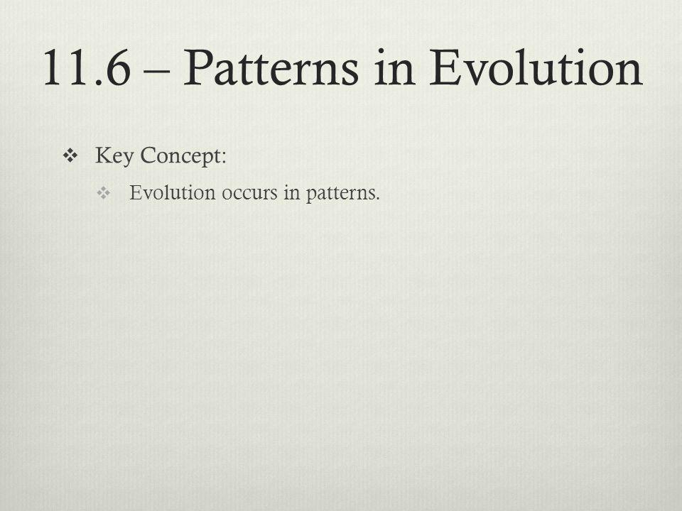11.6 – Patterns in Evolution Key Concept: Evolution occurs in patterns.
