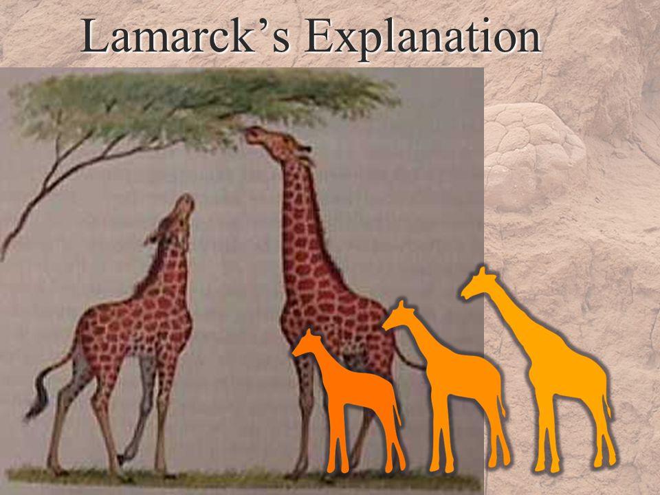 Lamarcks Explanation
